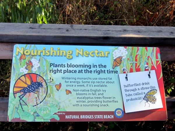 nourishing nectar sign about Monarch butterflies