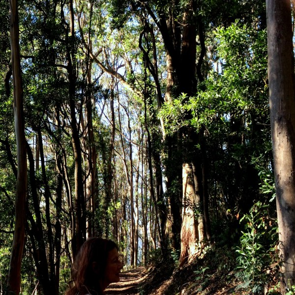 sutro forest with dappled sunlight