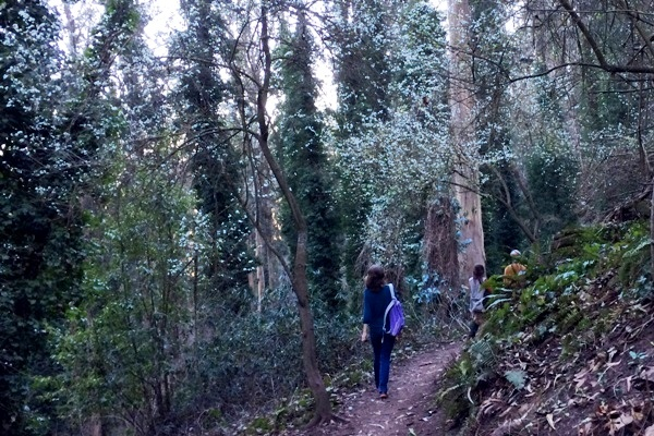 walking in Sutro Forest