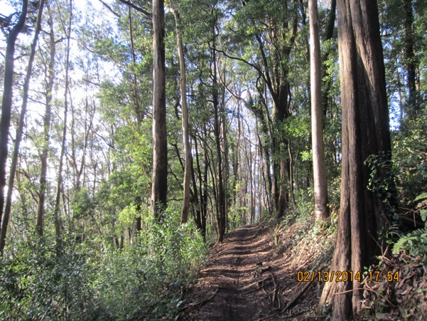 mt sutro forest trail 4