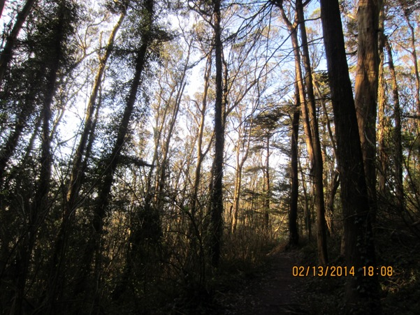 sunset light in Sutro Forest