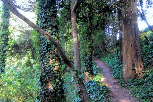 sutro forest may end 2014