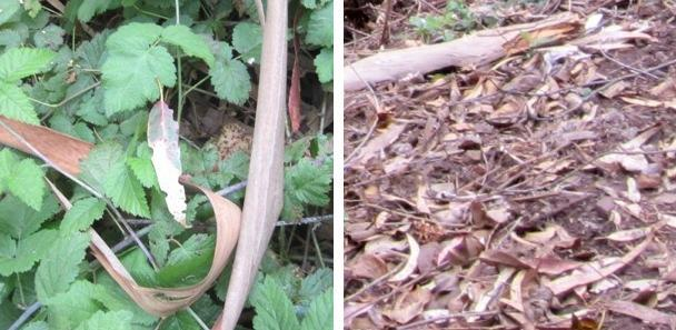 few leaves have beetle holes