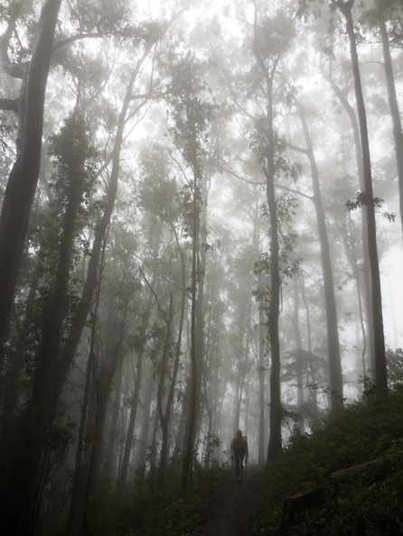 hiker in Sutro Cloud Forest June 2014