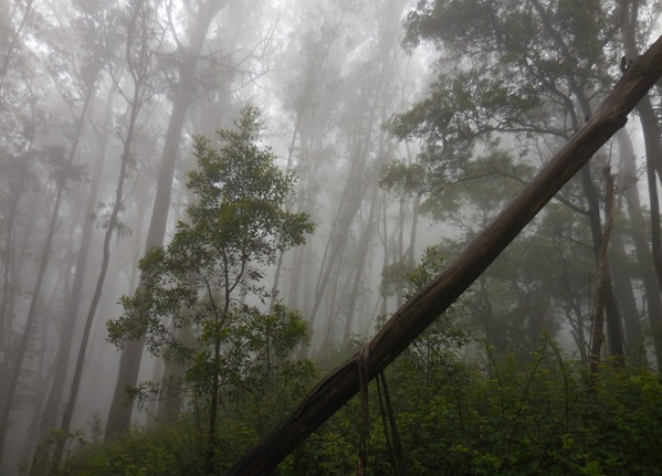 sutro cloud forest and young tree