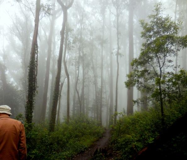 sutro cloud forest walk