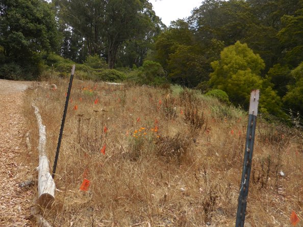 the flag meadow in the native plant garden