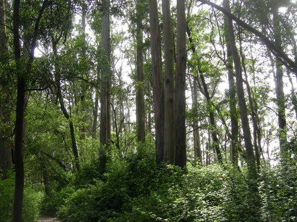 sutro forest 1