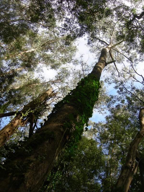 sutro forest 2