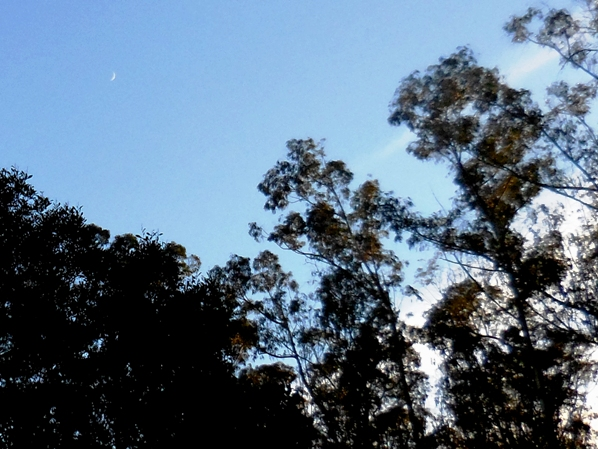 Childrens moon  over Sutro Forest