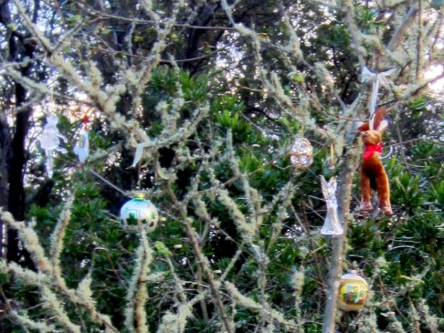ornaments on a small tree in Sutro Forest Native Garden