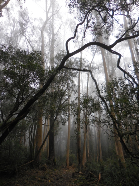 sutro cloud forest feb 2015