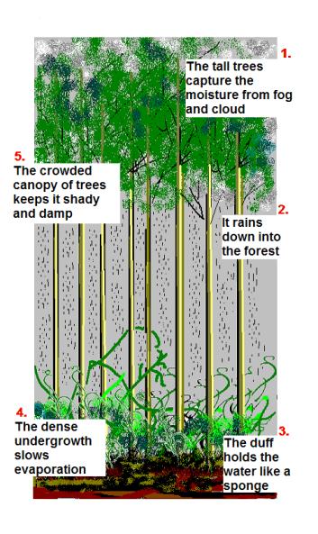 cloud forest diagram