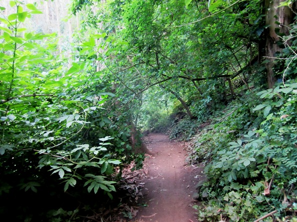 Green trail in Sutro Forest
