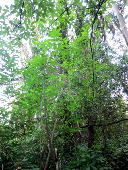 green understory in the forest