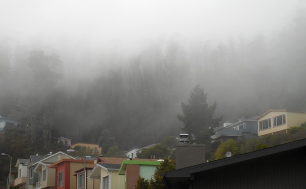 fog over sutro forest - 13 sept 2015