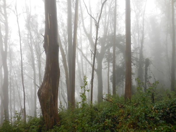 pics24 009 sutro cloud forest sept 2015