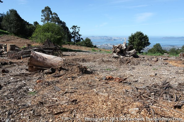 East Bay clearcut THIS is the plan for the forests — fear overrides wisdom