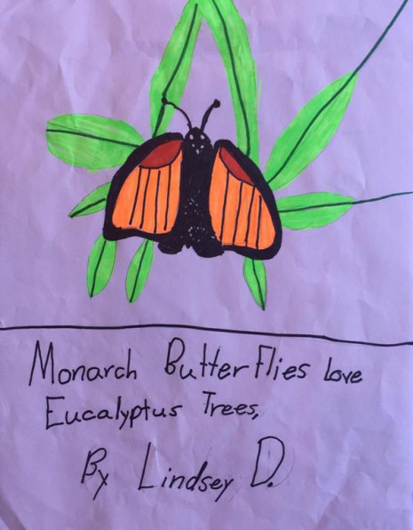 Lindsey-Monarch Butterflies Love Eucalyptus Trees' sm