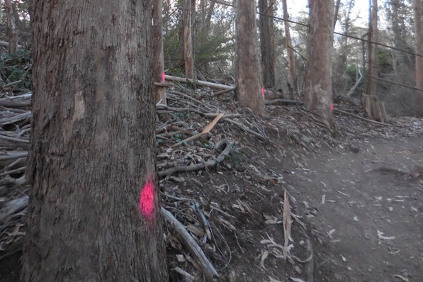 Sutro Forest pink dot trees