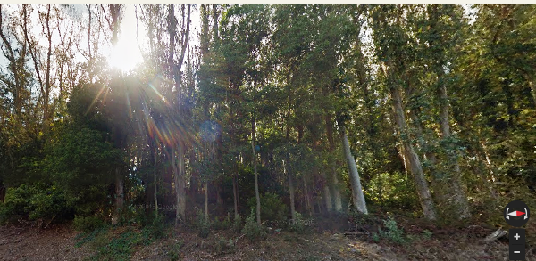 Sutro Forest - Johnstone Drive - Aug 2015 - Google Maps