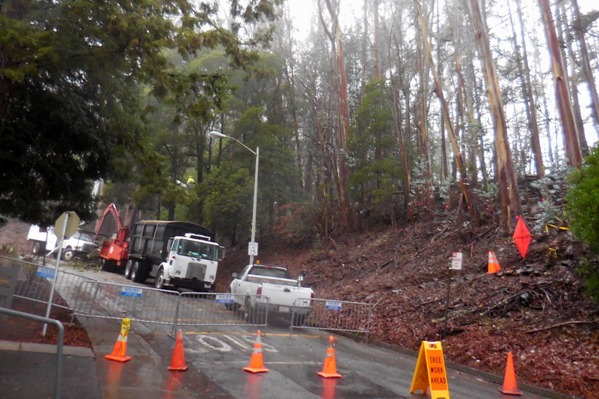 Sutro Forest Tree felling johnstone drive 1