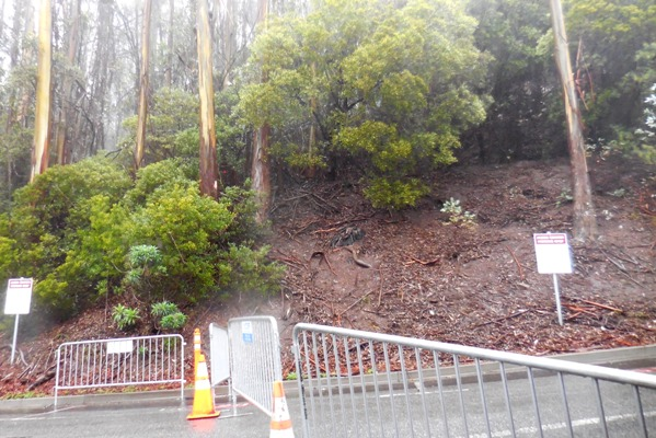 Sutro Forest Tree felling johnstone drive 10