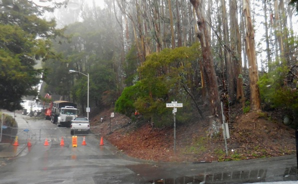 Sutro Forest Tree felling johnstone drive 5