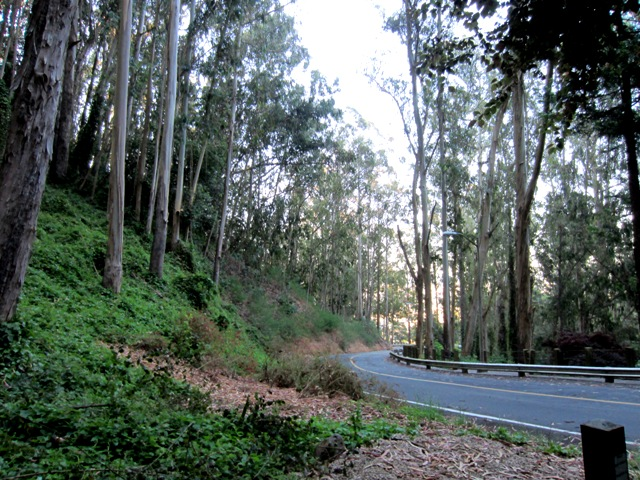 forest above Medical Center Way July 2011