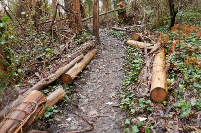 jan 2016 sutro forest logs