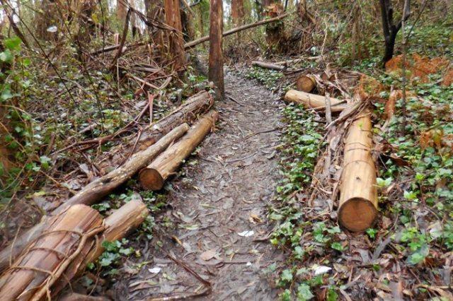 jan 2016 sutro forest logs