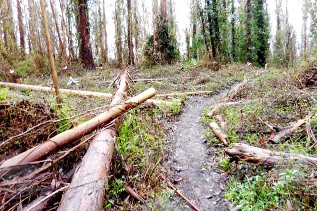 pics3 016 looks like a logging site