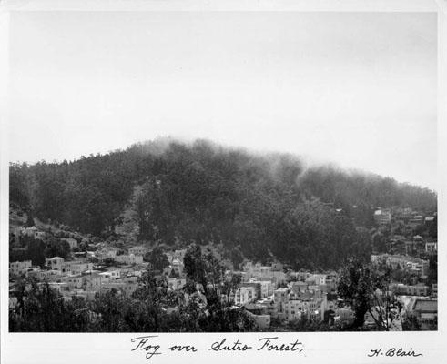 Fog over Sutro Forest - SAN FRANCISCO HISTORY CENTER, SAN FRANCISCO PUBLIC LIBRARY. www.sfpl.org/sfphotos