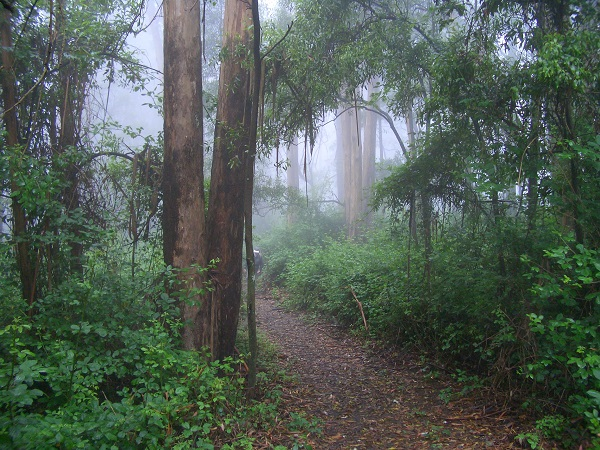 Beautiful forest path in the fog - Mount Sutro. Photo credit Tony Holiday