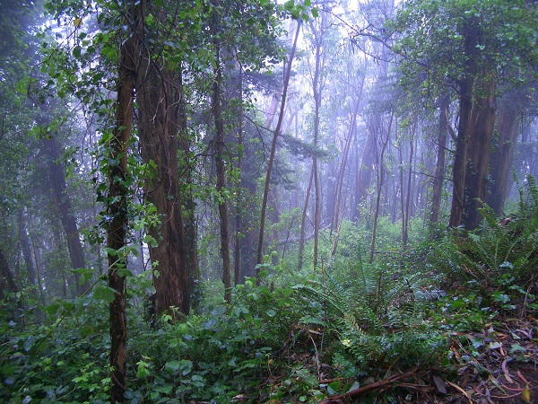 Misty forest with ferns - Mt Sutro. Image copyright Tony Holiday