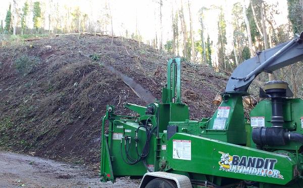 Sutro Forest Tree Destruction - Bandit Intimidator Jan 2021 600px